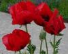Blüten-12